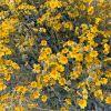 Photos of Visit to Borrego Springs, California