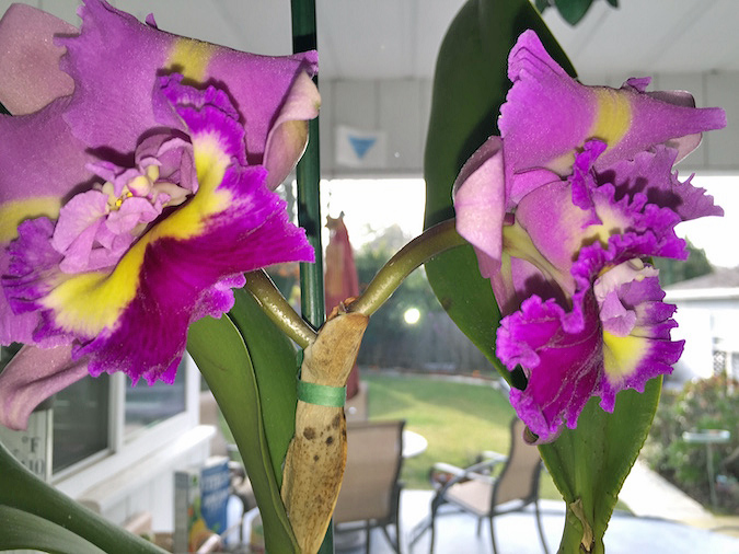 cattleya orchid when real estate agents hire real estate agents