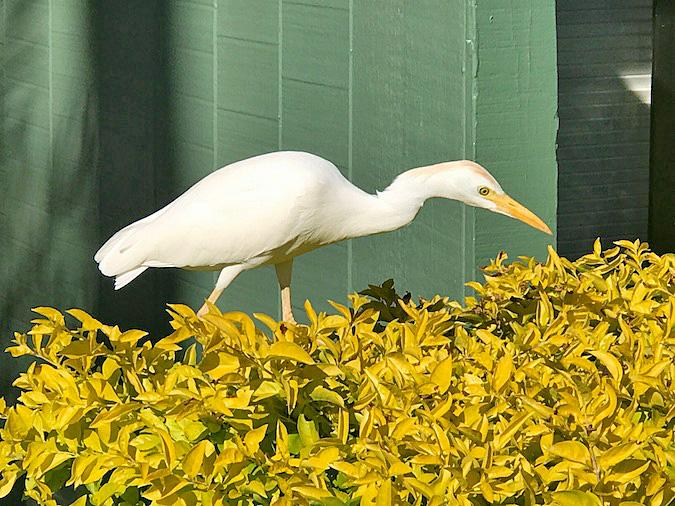 maui birds
