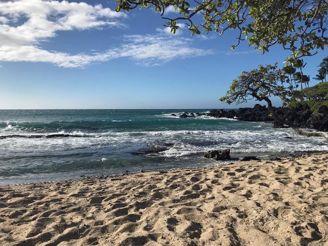 killing gnats in hawaii