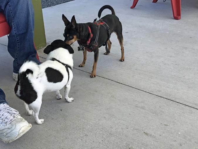 central bark dog park