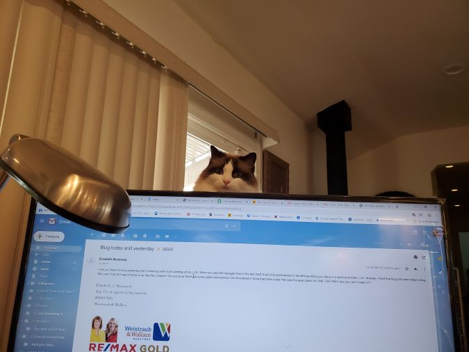 Computers and Cats in Sacramento