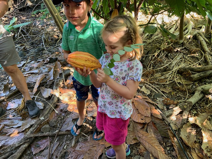cacao tour in kona