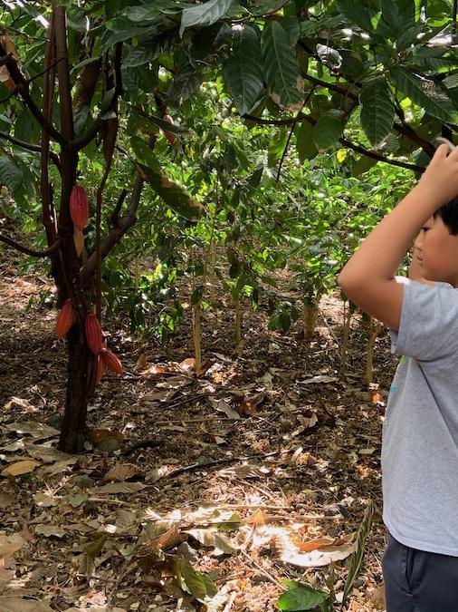 cacao farm tour in kona
